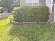 Shrub/Bush removal in Clarksville, Tennessee