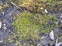 Moss Plant in St. Charles, Illinois