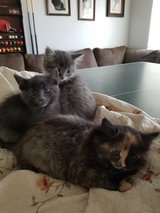 4 kittens ready for a home in Yucca Valley, California