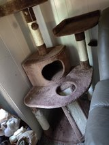 Cat Condo in Fort Campbell, Kentucky