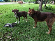 Sweet dog in need of a good home in Houston, Texas