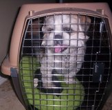 """""""Petmate"""" Crate for Small to Medium Size Dogs or Cats in El Paso, Texas"""