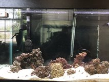 90 Gallon Saltwater Aquarium *Must Go* in Fairfax, Virginia