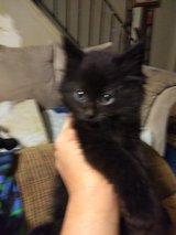 5 kittens looking for a forever home in Yorkville, Illinois