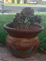 secculants in clay pots in Fairfield, California