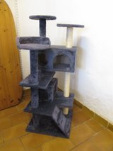 tall cat tree in Ramstein, Germany