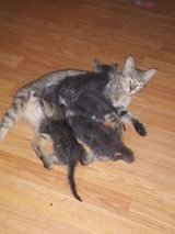 Kittens to Good Home in Conroe, Texas