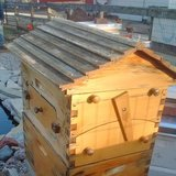 Bee keeping Flow hive in Aurora, Illinois