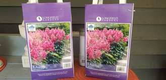 *never opened* Astilbe perennial bulbs in Plainfield, Illinois