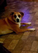 Free  to a good home 1 yr old mix in The Woodlands, Texas