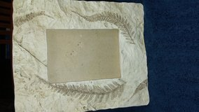 Fossil-like Picture Frame in Kingwood, Texas