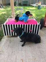 DOG or PET Bed in The Woodlands, Texas