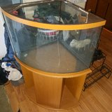 50 gallon bow front fish tank in Chicago, Illinois