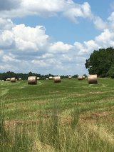 Round Hay Bales in Fort Polk, Louisiana