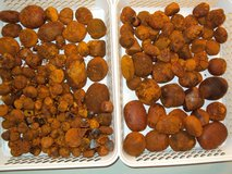 Ox Cow and Cattle Gallstones in Ramstein, Germany