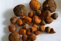Ox,Cow and Cattle Gallstones in Ramstein, Germany