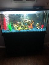 60 gallon fish tank with stand and more in Fort Leonard Wood, Missouri