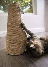 Cat Scratcher in Houston, Texas