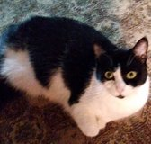 Free Cat in Fort Campbell, Kentucky