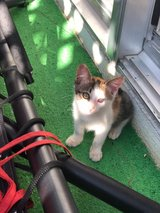 Hi, Im Lucy looking for a family in Okinawa, Japan