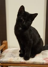 Beautiful and loveable Kitten in Camp Lejeune, North Carolina