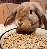 rehoming 2 rabbits in Naperville, Illinois