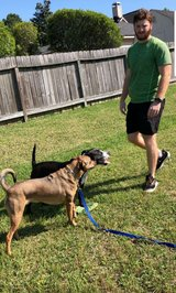 Dog Walking in The Woodlands, Texas