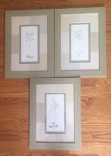 3 Framed Botanical Pictures in Joliet, Illinois