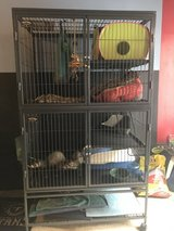 2 Ferrets & Cage in Clarksville, Tennessee