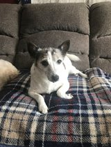 Old foster dog to loving home! in Clarksville, Tennessee