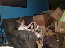 Free dog to a good home in Hopkinsville, Kentucky