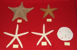Starfish & Sand Dollar Collection ~ Price individually or all for $25 in Aurora, Illinois
