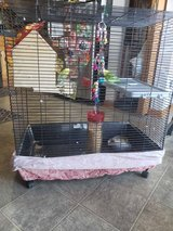 Cage with parakeet in Joliet, Illinois
