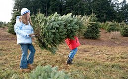 Small family farm accepts real Christmas trees drop off for composting. No plastic trees please.... in Fort Lewis, Washington