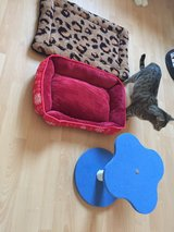 2 beds for cats/dogs and a schratcher for cats in Ramstein, Germany