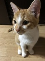 Mikey needs a good home in Okinawa, Japan
