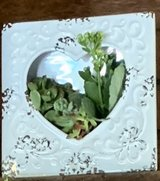 Heart plant frame in Travis AFB, California