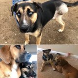 Two MISSING PUPPIES in Leesville, Louisiana