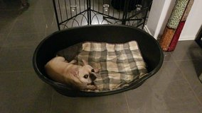 Large Dog Bed in Ramstein, Germany