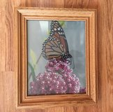 Butterfly Picture in Wood Frame in Chicago, Illinois