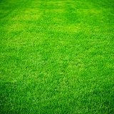 Free yard and lawn maintenance estimates in Spring, Texas