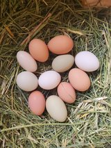 Duck & Chicken Eggs in Alamogordo, New Mexico