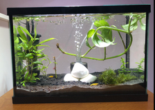 2.5 gallon fish tank in Westmont, Illinois