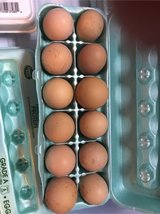 Fresh Farm Eggs in Fort Leonard Wood, Missouri