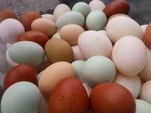 Farm Fresh Eggs in Fort Leonard Wood, Missouri