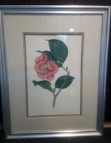 Flower painting Camellia Japonica/Japanese Camellia or glass/wood frame in Bolingbrook, Illinois