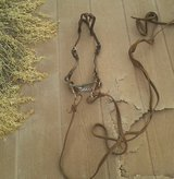 Bridle, halter, and lead rope in Alamogordo, New Mexico