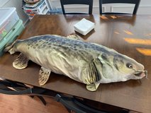 Reduced: Huge Catfish Pillow in Naperville, Illinois