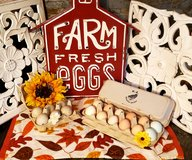 fresh free range chicken and duck eggs. in Fort Campbell, Kentucky