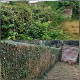 Hedge trimming, tree work or general tidy up and garden maintenance in Lakenheath, UK